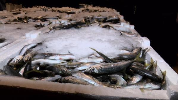 Balık sezonu kapandı, sezonun son balıkları halde