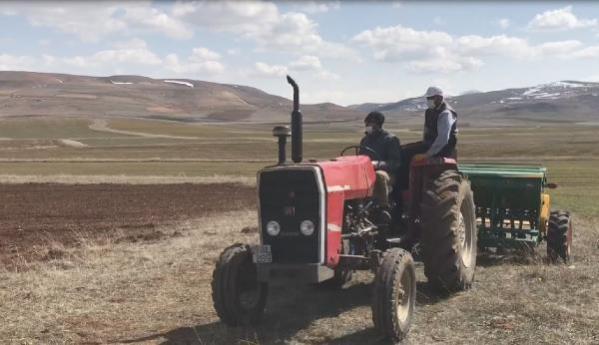 Bayburtlu çiftçilerin bayramda tarla mesaisi