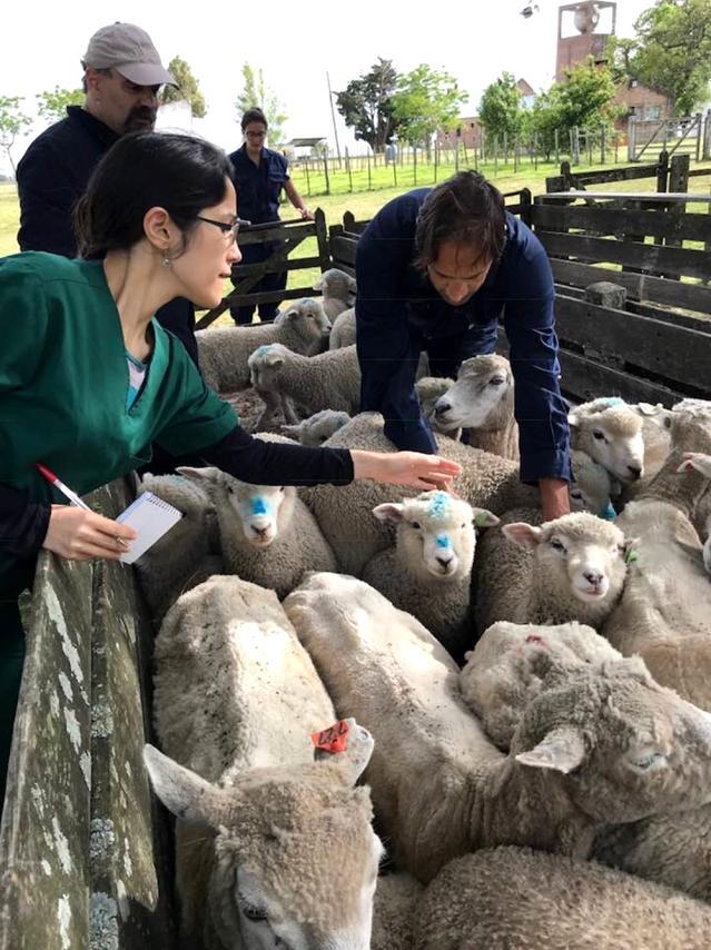 Çine MYO öğretim üyelerinin çalışmaları dünya haber sitelerinin gündeminde