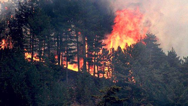 İçişleri Bakanlığı'ndan 81 ile orman yangınları genelgesi: Anız veya bitki örtüsü yakılmasına müsaade edilmeyecek
