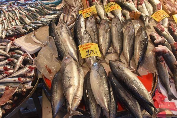 Palamut balığı