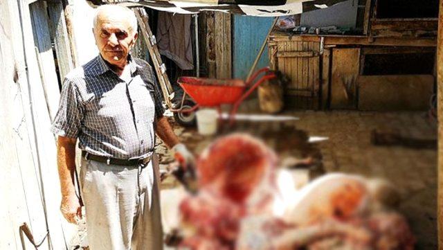 Yaşlı adamın kestiği kurbanlık hayvanda tüberküloz hastalığı tespit edildi