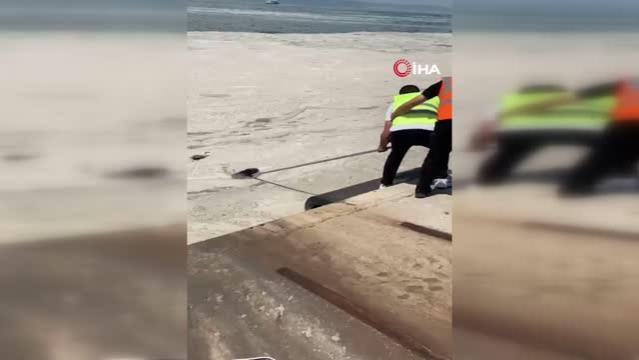 Deniz salyası çalışmaları sırasında ağa takılan martı kurtarıldı