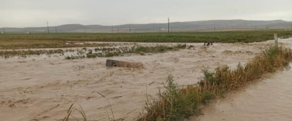 Konya'da sağanak; tarım arazileri suyla doldu