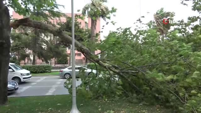 Samsun'da fırtına ağaçları yola devirdi