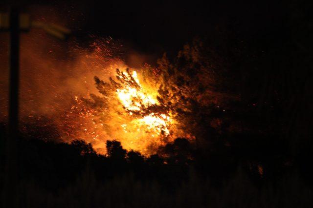Söke'de zeytinlik alanda çıkan yangın kısa sürede söndürüldü