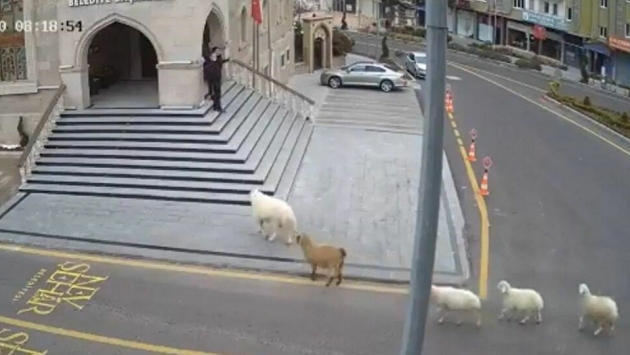 """""""1 koyun,1 keçi, 3 kuzu tarafından esir alınmış bulunmaktayız!"""""""