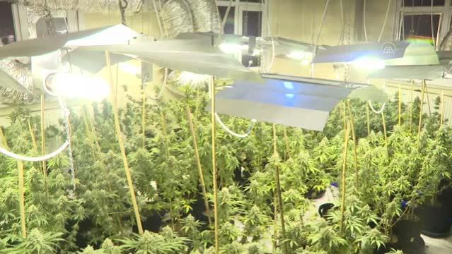 Avcılar'da uyuşturucu operasyonunda seraya çevrilen evde 88 kök marihuana ele geçirildi