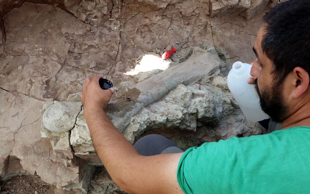 Çankırı'daki kazılarda bulundu 9 milyon yaşında ilk kez bütün ve sağlam olarak ele geçirildi