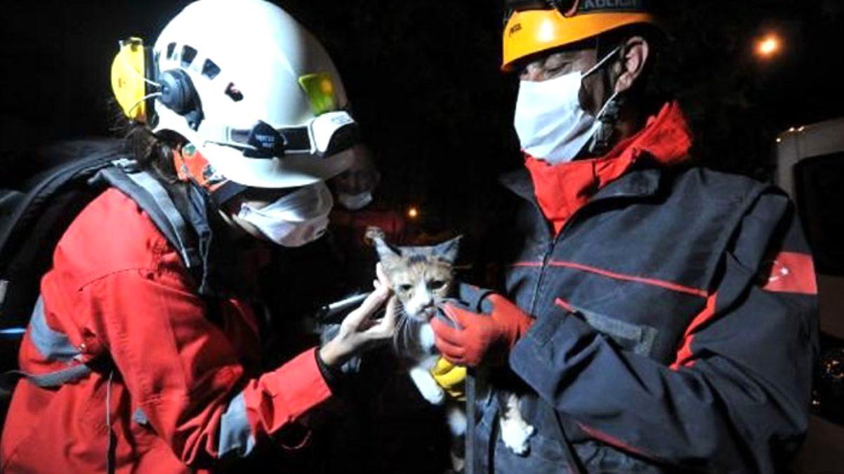 K-9 arama köpeği Bob'un enkazda bulduğu kedi kurtarıldı