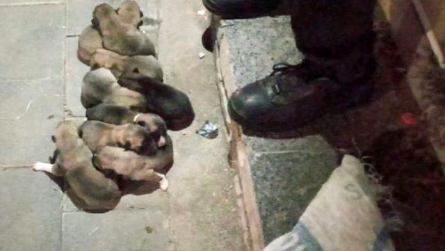 Sivas'ta 13 yavru köpek, çuval içerisinde sokağa atıldı