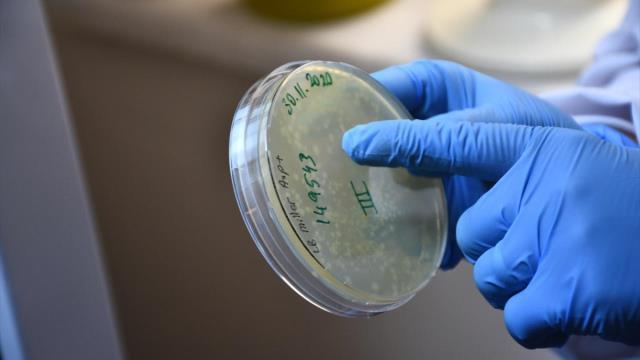 Türkiye'de Kovid-19'a karşı geliştirilen ilk mRNA aşısının yazın kullanıma sunulması planlanıyor