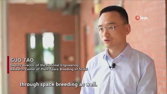 - Uzaydan Çin'e getirilen çeltik tohumları filizlendi