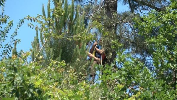 Yıpranan bayrağı değiştirmek için çıktığı ağaçta mahsur kaldı